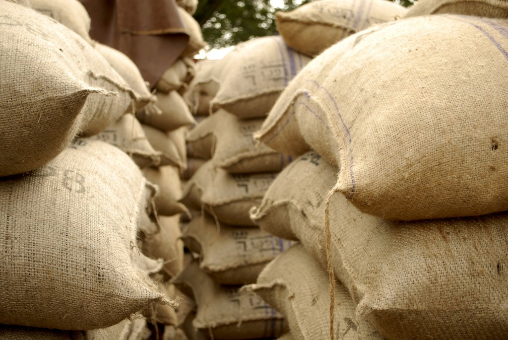 Cocoa beans packed in sacks
